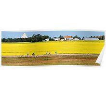 Canola Fields and Cyclists Poster