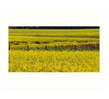 Canola Field and Fence Posts Art Print