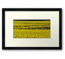 Canola Field and Fence Posts Framed Print