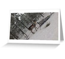 Reindeer Sleigh Ride in Ivalo  Greeting Card