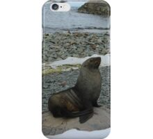 Statuesque Seal iPhone Case/Skin