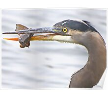 What a heron wouldn't do for a pair of hands Poster