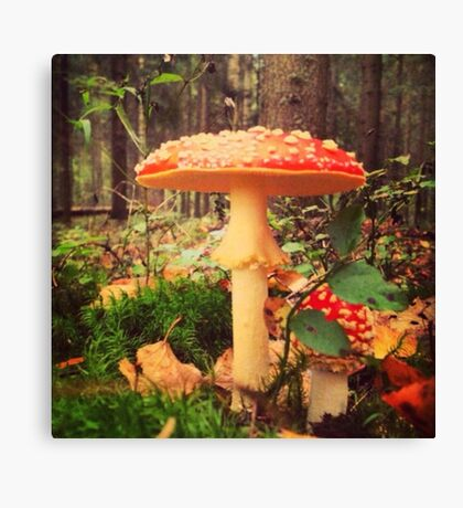 Toadstool in the forest Canvas Print