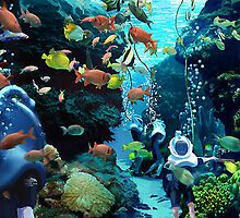 Discovery Cove orlando hotels by jhonstruass