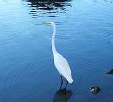 Poignant Lake Anza Swan by photoartful