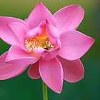 Lily by Allport Photography
