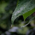 rainy song 3 by limon