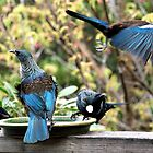 Tui's - cafeteria style, next one please.........!! by Roy  Massicks