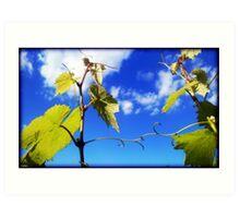 Greek vine  Art Print