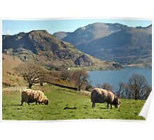 Rams at Buttermere  Poster