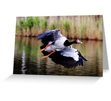 A Pie In The Sky  ~ Magpie Goose ~ Greeting Card