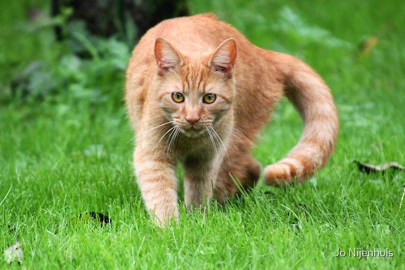 Dickens a little Tiger - So Full of Life by Jo Nijenhuis