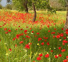 Beautiful IBIZA Poppy Fields forever by Hungaro