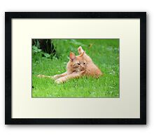 Dickens - Enjoying Life Framed Print