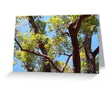 Kookaburra In A Great Tree - 10 11 12 Greeting Card