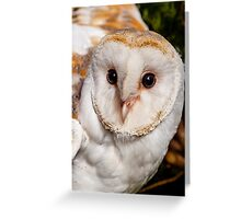 Barn owl head and face Greeting Card