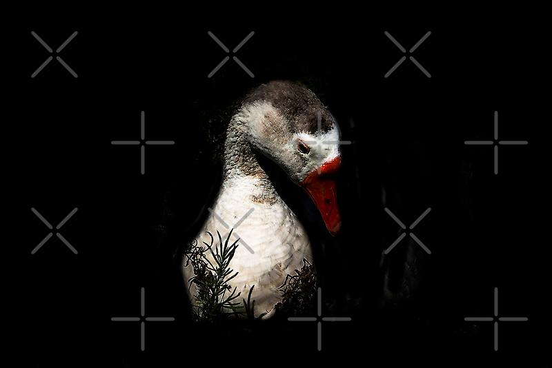Moonlight Goose by heatherfriedman