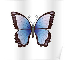 Vector Butterfly Poster