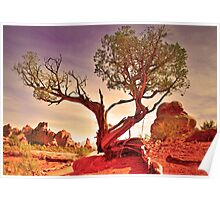 A Tree in the Desert Poster