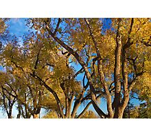 Crazy Golden Tree Sky Photographic Print