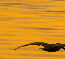 Pelican silhouetted with an orange sunset Sticker