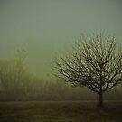 Through the Fog by beekokweh