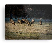 Flock Of Wild Turkeys Metal Print