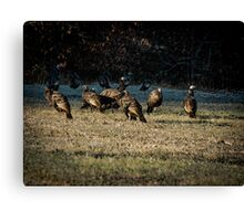 Flock Of Wild Turkeys Canvas Print