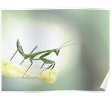 Young mantis Poster