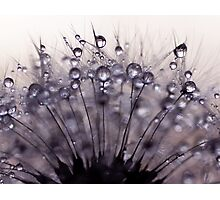 droplets of mauve Photographic Print