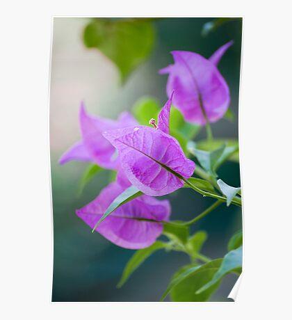 Purple veins Poster
