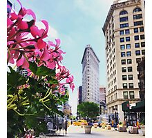 Flatiron in Full Bloom Photographic Print