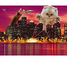 Cat Dooms Day Photographic Print