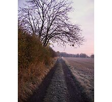 Green Lane under the Ash Tree Photographic Print
