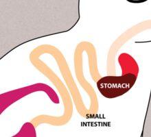 Rabbit's Digestive System Sticker