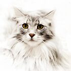 Maine Coon iPad Case by Carol Bleasdale
