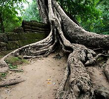 The Roots of Ta Prohm, Cambodia by Michael Treloar