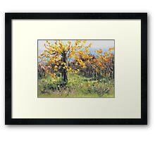Vineyard Gold Framed Print