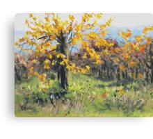 Vineyard Gold Canvas Print