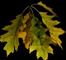 Oak Leaves, 1 by Lee LaFontaine