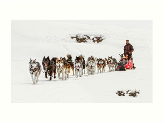Dog Sledding by Patricia Jacobs CPAGB LRPS BPE4