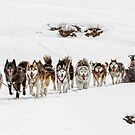 Dog Sledding by Patricia Jacobs CPAGB LRPS BPE3