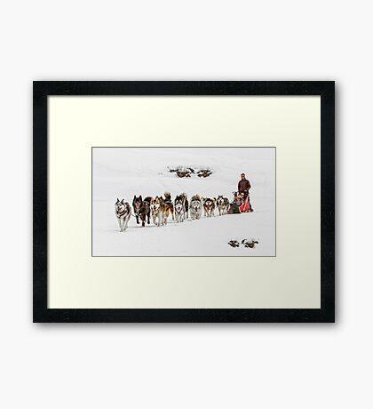 Dog Sledding Framed Print