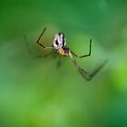 Spider Hunting by Don Guindon