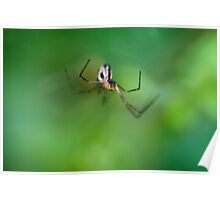 Spider Hunting Poster