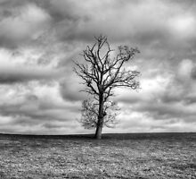 Single Tree by Dave Godden