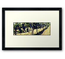 Greek vineyard Framed Print