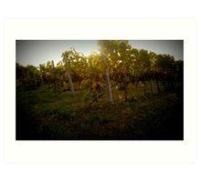 Greek vineyard Art Print