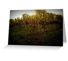 Greek vineyard Greeting Card