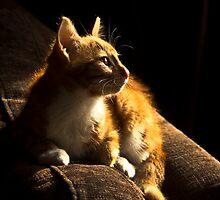 Sun Worshiper by Theresa Elvin